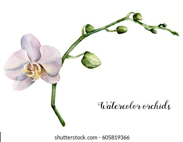 Watercolor white orchids. Hand painted floral botanical illustration isolated on white background. For design or print