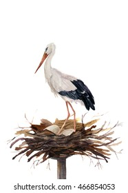 Watercolor white stork in the nest hatching eggs. Ciconia bird illustration isolated on white background. For design, prints or background