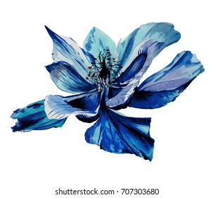 Watercolor wild field flower.Blue,indigo,violet petals.Beautiful,magic,exotic,tropical plant isolated on the white background.