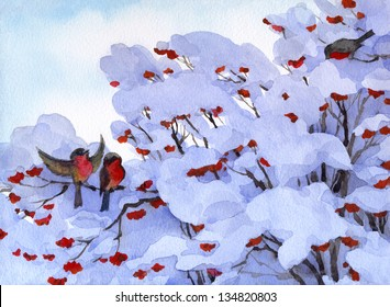 Watercolor winter scene. Bullfinch sitting on a snow-covered branches of viburnum with lush bunches bright red berries