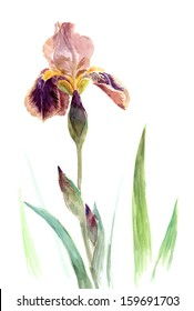 Watercolors on the white: iris color of cocoa and plums