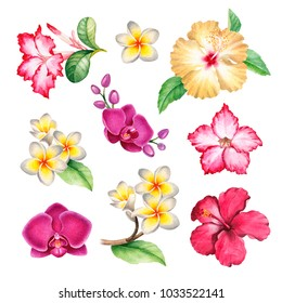 Watercolour illustrations of tropical flowers