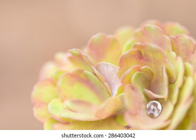waterdrop on a plant