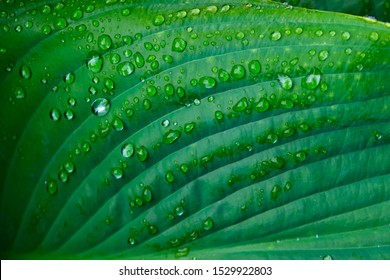 Waterdrops on green leaf after rain