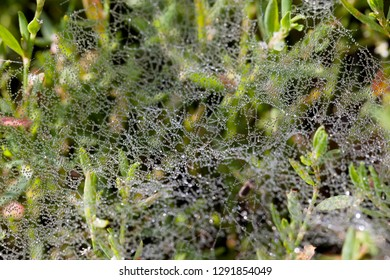 waterdrops on a spiderweb