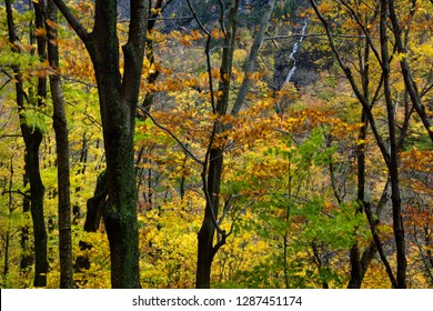 Waterfall from Bear Head peak Mount Mansfield from Smugglers Notch Vermont in Fall