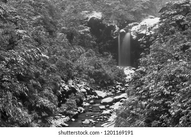 A Waterfall Cascades Into an Icy River on a Thickly Forested, Snow-Clad Mountain. Mount Ruapehu, New Zealand. Black and White