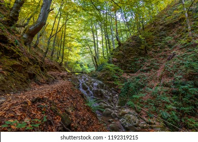 Waterfall. Colorful landscape with beautiful waterfall at mountain river in the forest.