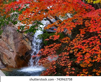 An waterfall flow in red  maple leaves  in autumn at Seorak mountain, one of the most beautiful spot in Korea