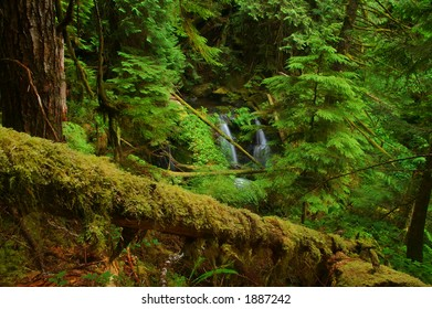 Waterfall in the forest of the Olympic Peninsula of Washington State