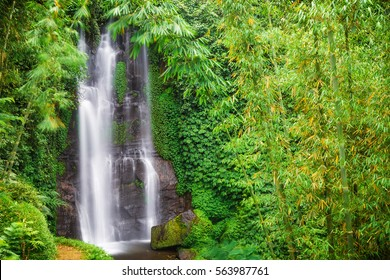 Waterfall hidden in the tropical jungle. Bamboo