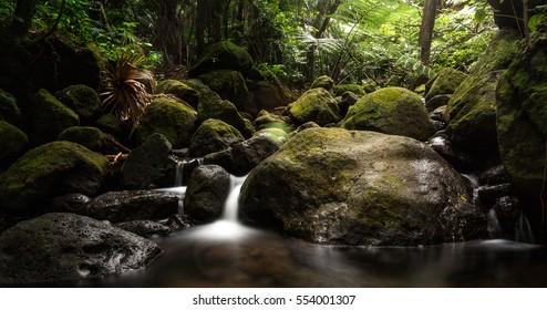 Waterfall manoa falls