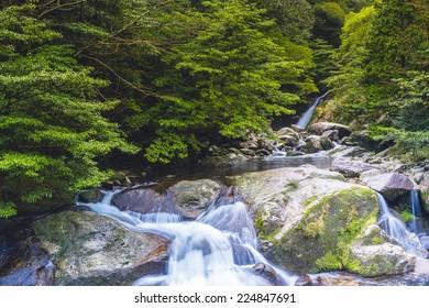 Waterfall and mossy rocks in Yakushima, Japan