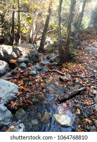 Waterfall in the mountains in the autumn forest, fallen leaves. The Troodos Mountains Cyprus.