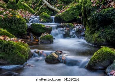 Waterfall in Nature