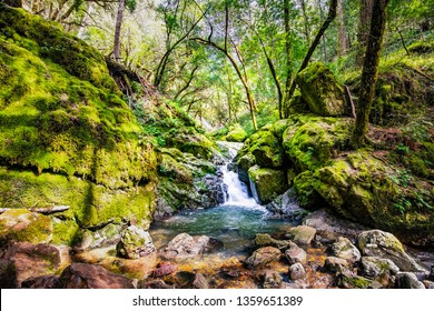Waterfall on the Cataract trail in Marin Municipal Water District, Marin county, north San Francisco bay area, California
