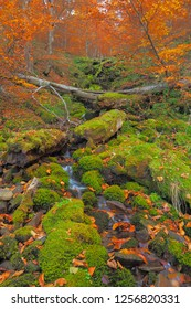 Waterfall on the forest stream in autumn colors. Bieszczady. Bieszczady National Park.