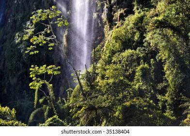 waterfall in rainforest