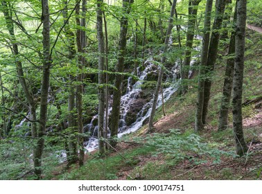 Waterfall running down behind the trees in Croatia, Plitvice Lakes