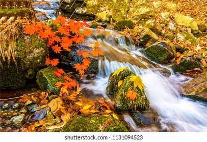 Waterfall stream flowing in autumn forest. Autumn waterfall poster. Autumn forest waterfall stream view