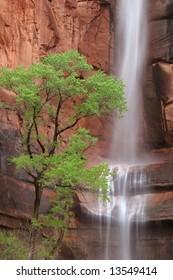 Waterfall at Weeping Rock, Zion national park. Utah. USA