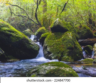Waterfall in Yakushima, Japan