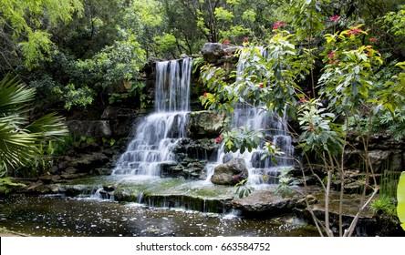 Austin Botanical Images Stock Photos Vectors Shutterstock