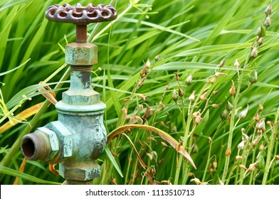 Waterford, Connecticut/USA- June 14, 2014: A horizontal image of the patina and verdigris of a water spigot in a flower garden.