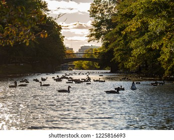 waterfowl in front of bridge