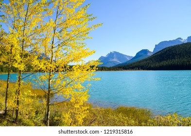 Waterfowl Lake with autumn leaves, Banff National Park, Canadian Rockies, Alberta, Canada