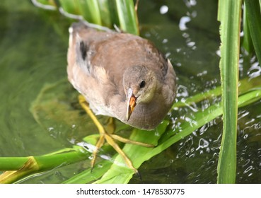 waterfowl with long thin legs and beak stands on a green branch in a pond pond