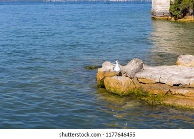 waterfowl on a small island in Lake Garda
