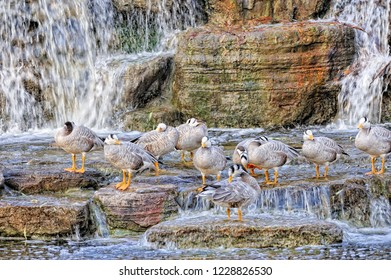 Waterfowl perched image