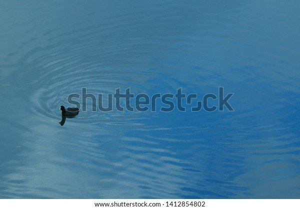 Waterfowl in the river. Water surface reflecting the blue sky.