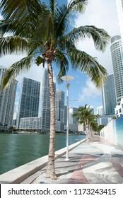 The waterfront of Miami River Walk in Miami downtown (Florida).