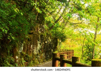 Waterfront walkway Tama river in autumn foliage, vibrant autumn colors in Dakigaeri Gorge near Mikaeri Falls (waterfall) Senboku, Kakunodate, Akita Prefecture