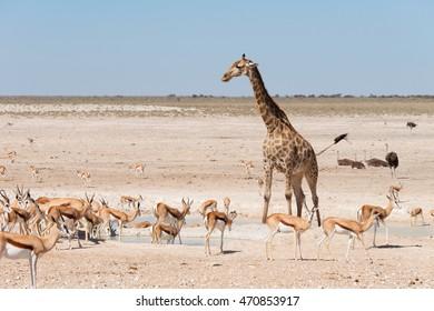 Waterhole with wild animals in Etosha national park