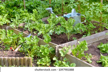 watering can among leaf of vegetable plants growing in a garden