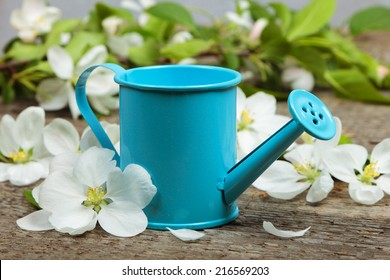The watering can with apple blossom on wooden background