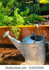Watering Can in Garden