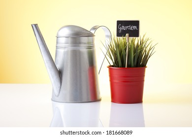 watering can and house plant isolated on yellow