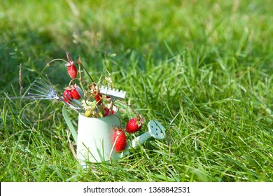 Watering can, wild strawberry and garden tools on grass