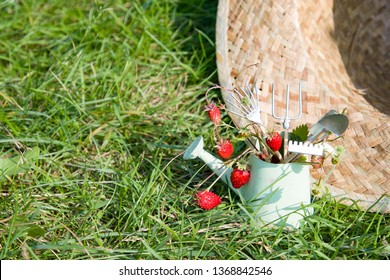 Watering can, wild strawberry, straw hat and garden tools
