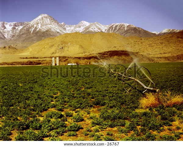 Watering a farm in Imperial Vallet, California