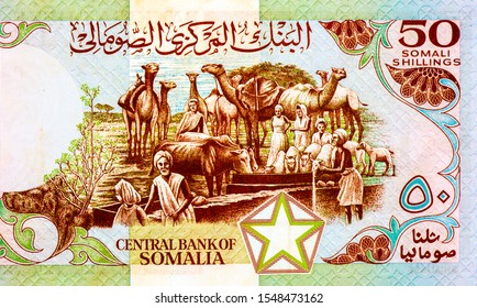Watering and feeding animals: men and women with camels, sheep and cows at feeding trough. Portrait from Somalia 50 Somali Shillings 1983-1989 Banknote. Somalia money, Somalia Banknotes. Collection.