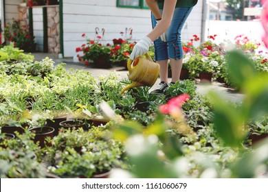 Watering flowers in greenhouse