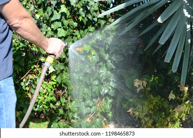 Watering the garden with a hosepipe