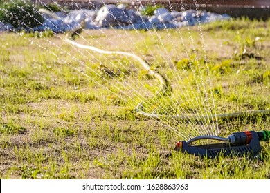 Watering germinating lawn seeds with an oscillating sprinkler in the summer garden