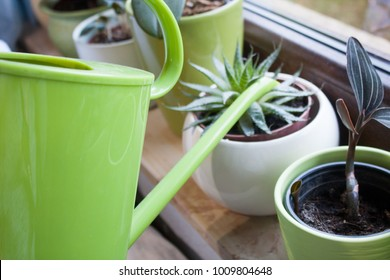 Watering indoor potted plants in decorative ceramic white and green plant pots with a bright green plastic watering can on a window sill. Aloe vera and two different species of orchids.