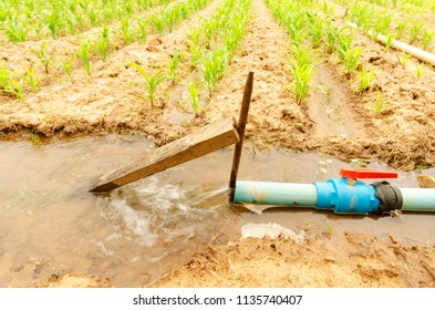 Watering into corn plant in country side Thailand for farmland concept